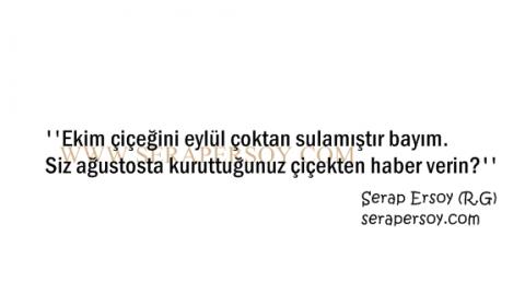 Serap Ersoy - Ekim Çiçeği (serapersoy.com)